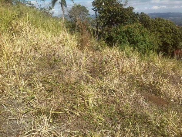  Bienes Raices Republica Dominicana